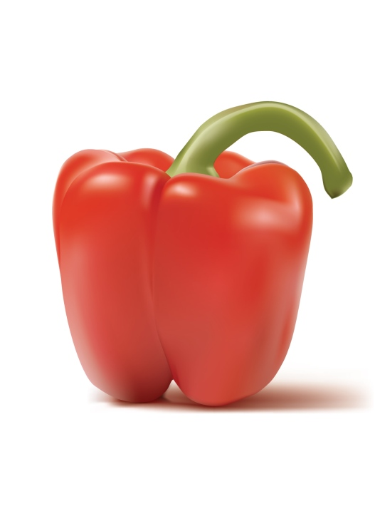 Red pepper photo realistic vector render
